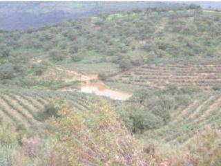 Suelo en Encinasola