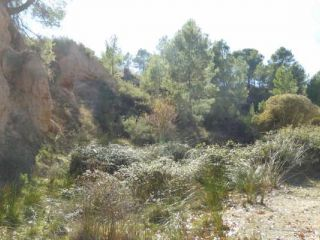 Terreno rústico en venta en pre. hoya blanquilla y hoya carrasca